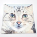 Cute Cat Cushion Cover