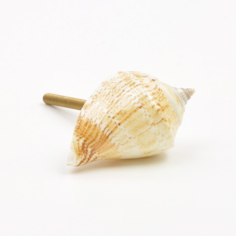 Sea Shell Cupboard Knob - C