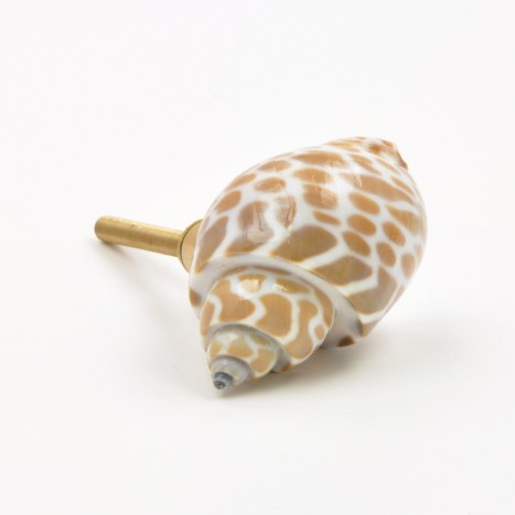 Sea Shell Cupboard Knob