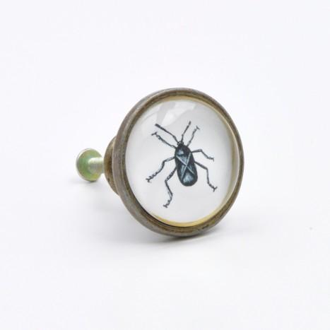 Vintage Beetle Cupboard Knob